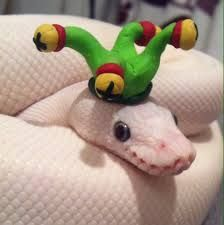 Cute snake with a hat, like the ones Arturo Islas likes to pet