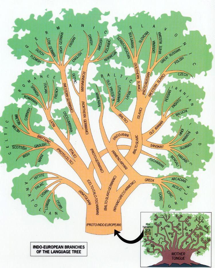 Etimology and cognates